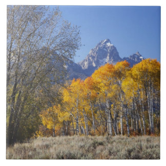 Aspen trees with the Teton mountain range 3 Tile