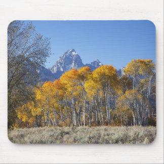 Aspen trees with the Teton mountain range 4 Mouse Pad