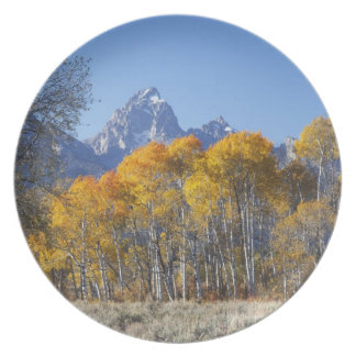 Aspen trees with the Teton mountain range 4 Plate