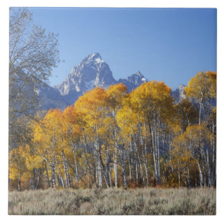 Aspen trees with the Teton mountain range 4 Tile