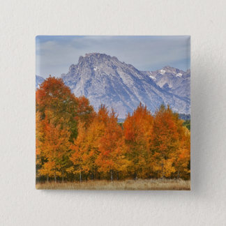 Aspen trees with the Teton mountain range 5 15 Cm Square Badge