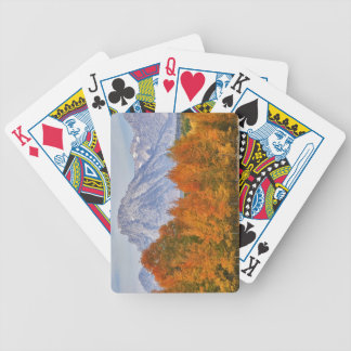 Aspen trees with the Teton mountain range 5 Bicycle Playing Cards