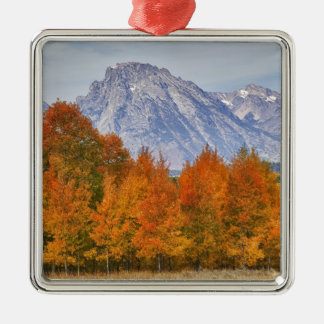 Aspen trees with the Teton mountain range 5 Christmas Ornament