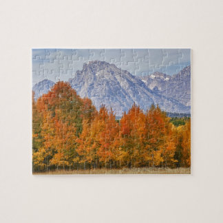 Aspen trees with the Teton mountain range 5 Jigsaw Puzzle