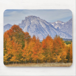 Aspen trees with the Teton mountain range 5 Mouse Pad