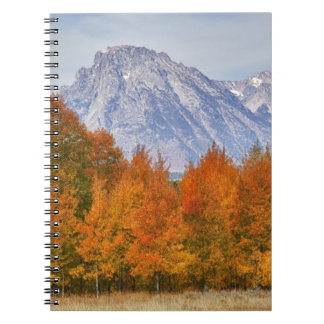 Aspen trees with the Teton mountain range 5 Notebook