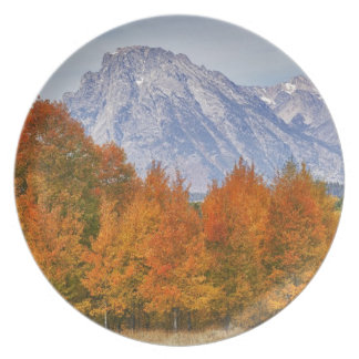 Aspen trees with the Teton mountain range 5 Plate