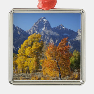 Aspen trees with the Teton mountain range 6 Christmas Ornament