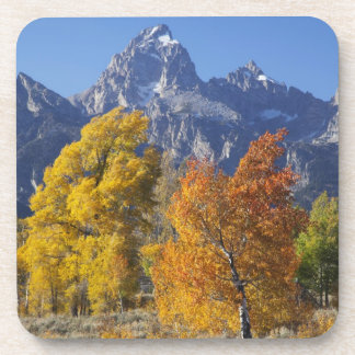 Aspen trees with the Teton mountain range 6 Coaster