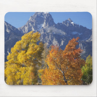 Aspen trees with the Teton mountain range 6 Mouse Pad