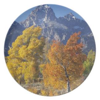 Aspen trees with the Teton mountain range 6 Plate