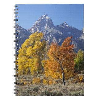 Aspen trees with the Teton mountain range 6 Spiral Notebook
