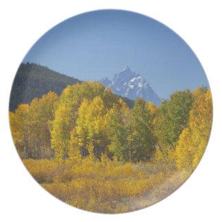 Aspen trees with the Teton mountain range 7 Dinner Plates