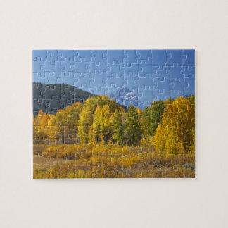 Aspen trees with the Teton mountain range 7 Jigsaw Puzzle