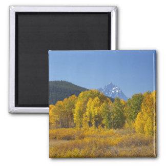 Aspen trees with the Teton mountain range 7 Magnet