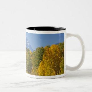 Aspen trees with the Teton mountain range 7 Two-Tone Coffee Mug