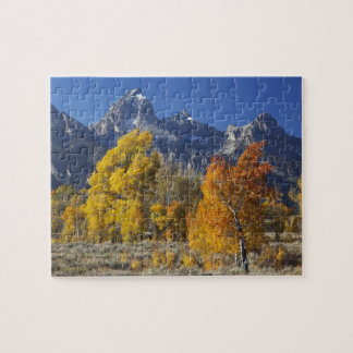 Aspen trees with the Teton mountain range Jigsaw Puzzle