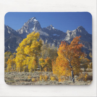 Aspen trees with the Teton mountain range Mouse Mat