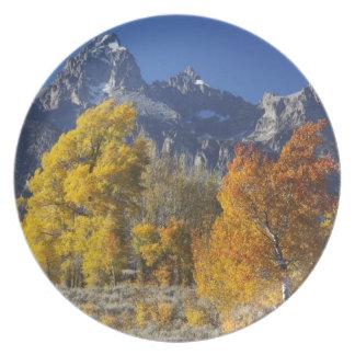 Aspen trees with the Teton mountain range Plate