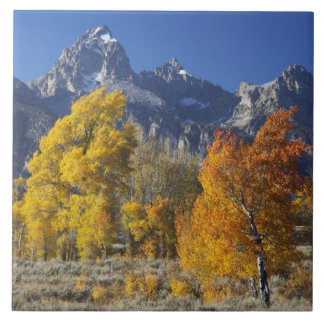 Aspen trees with the Teton mountain range Tile
