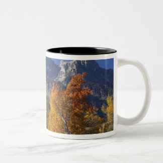Aspen trees with the Teton mountain range Two-Tone Coffee Mug