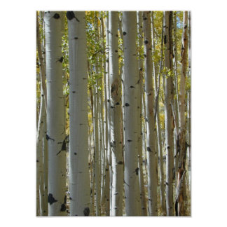 Aspen Trunks vertical print