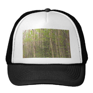 Aspens Trucker Hat
