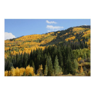 Aspens in Colorado Poster