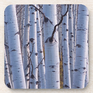 Aspens In Gunnison National Park Coaster