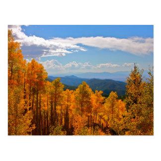 Aspens in New Mexico Postcard