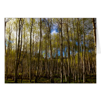 Aspens in the Brazos, New Mexico Greeting Card