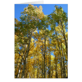 Aspens in the Fall Card