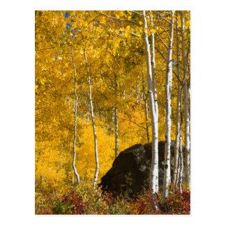 Aspens Postcard