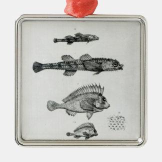 Aspidophorus Chiloensis and Agriopus Hispidus Silver-Colored Square Decoration