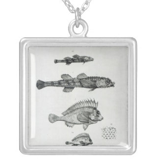 Aspidophorus Chiloensis and Agriopus Hispidus Silver Plated Necklace