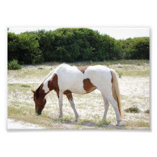 Assateague Island horse Photo Print