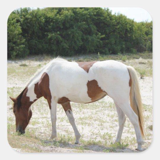 Assateague Island horse Square Sticker