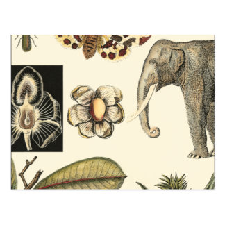 Assorted Animals Painted on Cream Background Postcard