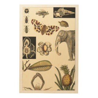 Assorted Animals Painted on Cream Background Wood Print