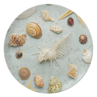 Assorted seashells on blue background plate
