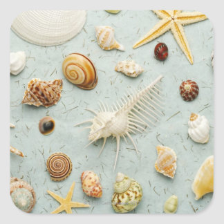 Assorted seashells on blue background square sticker