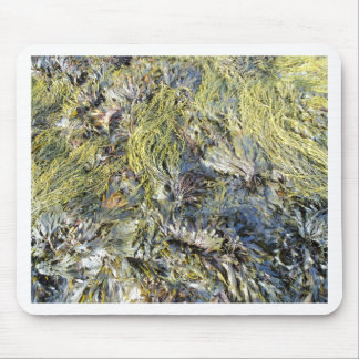 Assorted Seaweeds Mouse Pad