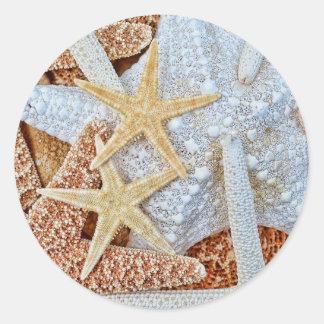 Assortment of Starfish Sticker