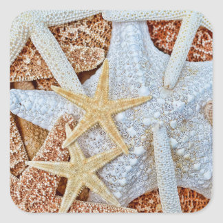 Assortment of Starfish Square Stickers