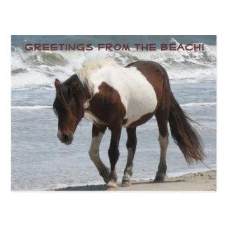 Assteague Island Pony Postcard