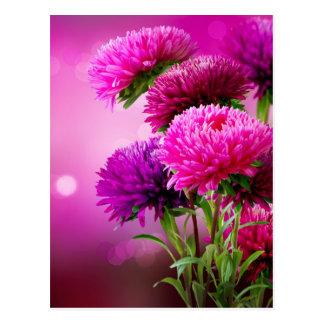 Aster Autumn Flowers Art Design Postcard