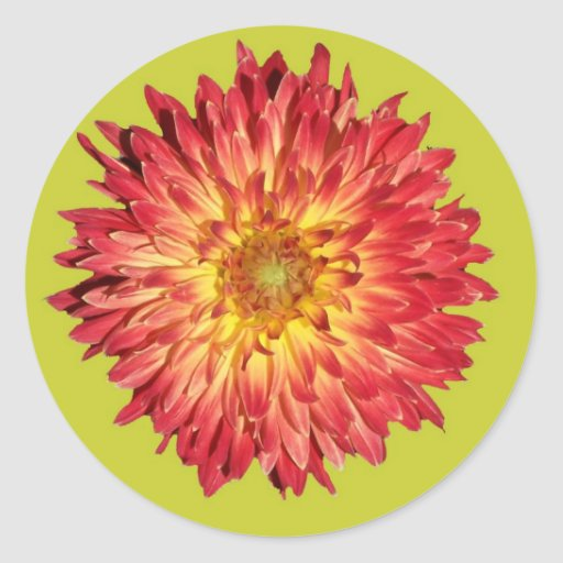 aster cutout lime round sticker