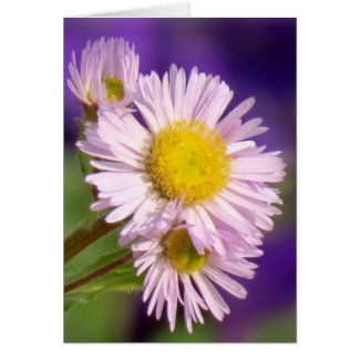 Aster Daisies Card