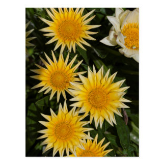 aster flower in the garden postcard