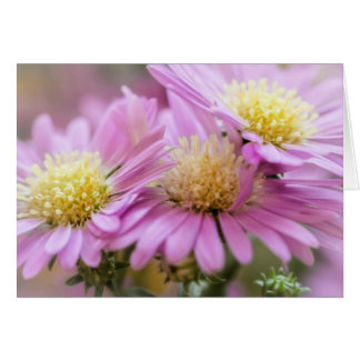 Aster Flowers Card